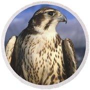 A Prairie Falcon At Dusk Round Beach Towel