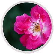 A Pretty Pink Rose Round Beach Towel