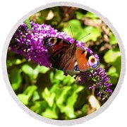 A Red Admiral On A Purple Budlier Round Beach Towel