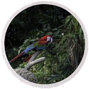 A Red Green And Blue Macaw On A Branch In The Jurong Bird Park Round Beach Towel
