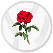 A Red Rose On White Round Beach Towel