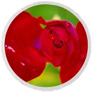 A Red Wet Rose Round Beach Towel
