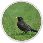 A Robin In June Round Beach Towel