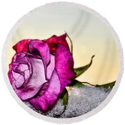 A Rose In Winter Round Beach Towel