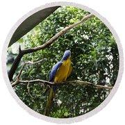 A Single Macaw Bird On A Branch Inside The Jurong Bird Park Round Beach Towel