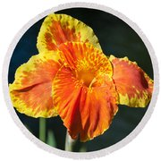 A Single Orange Lily Round Beach Towel