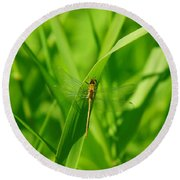 A Small Dragonfly Round Beach Towel