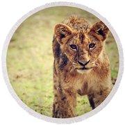 A Small Lion Cub Portrait. Tanzania Round Beach Towel