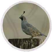 A Sole Rooster Quail Round Beach Towel