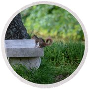 A Squirrel's Day Out Round Beach Towel