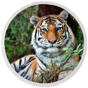 A Tigers Glance Round Beach Towel
