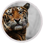 A Tiger's Look Round Beach Towel