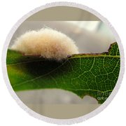 A Tribble On The Edge Round Beach Towel