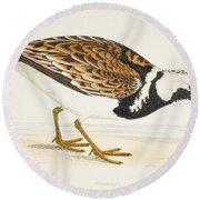 A Turnstone. Arenaria Interpres. From A Round Beach Towel
