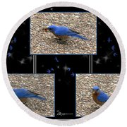 A Typical Eastern Bluebird's Lunch - Featured In Comfortable Art Group Round Beach Towel