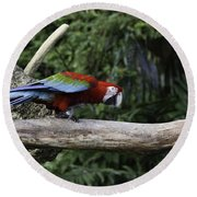 A Very Colorful And Bright Macaw Bird Perched On A Branch Round Beach Towel