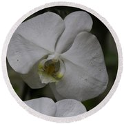 A White Orchid Flower Inside The National Orchid Round Beach Towel