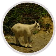 A Young Mountain Goat Round Beach Towel