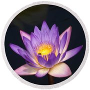 Accents On A Purple Waterlily... Round Beach Towel