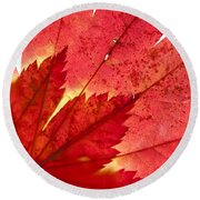 Acer From Beneath Round Beach Towel