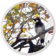 Acorn Woodpecker In Tree  In Park Sierra-ca Round Beach Towel