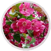Adams Crabapple Blossoms Round Beach Towel