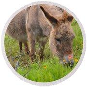 Adorable Mini-burro Round Beach Towel