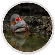 Adorable Zebra Finch Taking A Bath Round Beach Towel