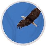 Adult Bald Eagle Soaring Haliaeetus Leucocephalus Round Beach Towel