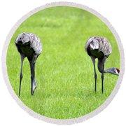 Adult Florida Sandhill Cranes Grus Canadensis Pratensis I Usa Round Beach Towel