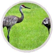 Adult Florida Sandhill Cranes Grus Canadensis Pratensis II Usa Round Beach Towel