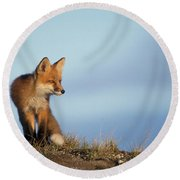 Adult Red Fox On The Tundra In Late Round Beach Towel