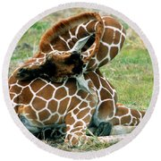 Adult Reticulated Giraffe Round Beach Towel