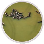 Aerial View Of Hippos In A Lake Round Beach Towel