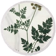 Aethusa Cynapium From Phytographie Round Beach Towel