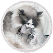 Affectionate Felines Round Beach Towel