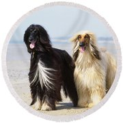 Afghan Hound Dogs Round Beach Towel