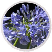 African Blue Lily Round Beach Towel