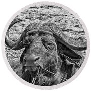 African Buffalo V4 Round Beach Towel