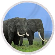 African Bull Elephants In Rain Endangered Species Tanzania Round Beach Towel