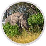 African Bush Elephant Round Beach Towel
