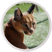 African Caracal Lynx  Round Beach Towel