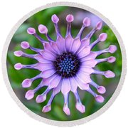 African Daisy - Square Format Round Beach Towel