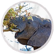 African Elephant Browsing In Kruger National Park-south Africa Round Beach Towel