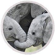 African Elephant Calves Loxodonta Round Beach Towel
