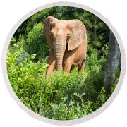 African Elephant Coming Through Trees Round Beach Towel