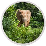 African Elephant Eating In The Shrubs Round Beach Towel