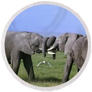 African Elephant Greeting Endangered Species Tanzania Round Beach Towel
