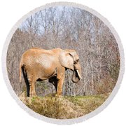African Elephant On A Hill Round Beach Towel