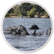 African Elephants Swimming In The Chobe River Round Beach Towel